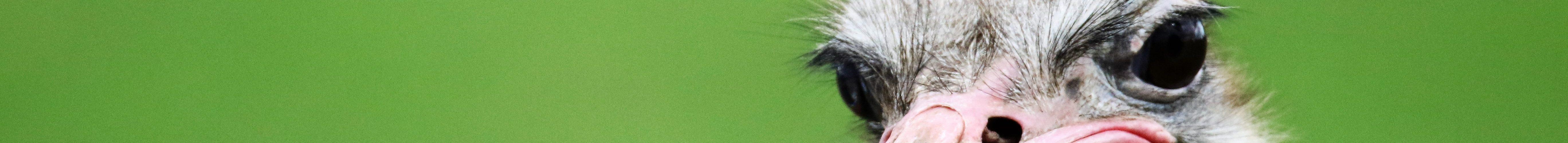 tête d'autruche